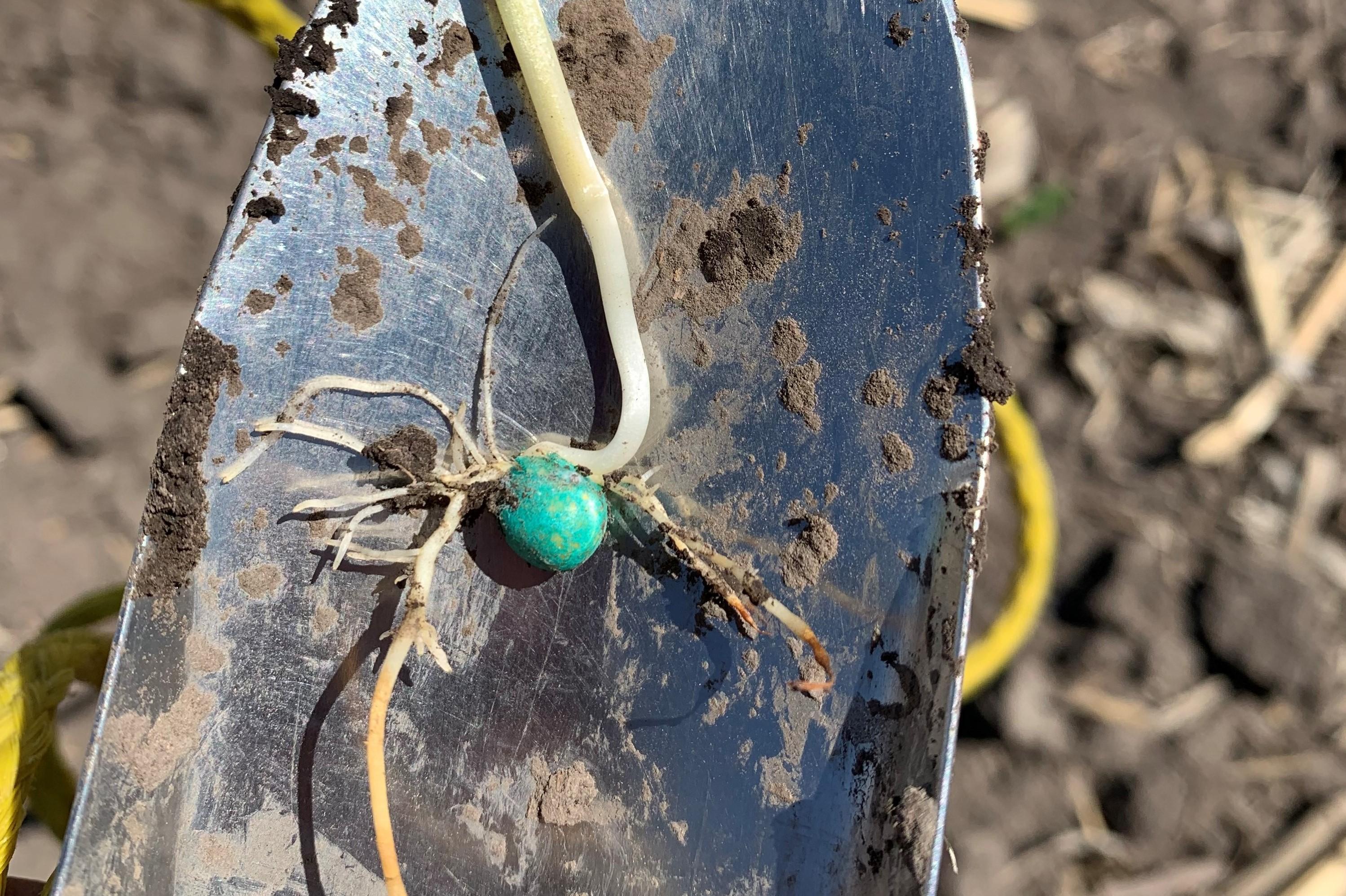 Fertilizer Root Injury